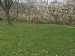 Teren Intravilan de Vanzare in Provita (Provita de Sus, Prahova)