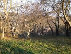 Teren Intravilan de Vanzare in Comarnic (Poiana, Prahova)