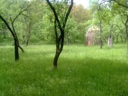 Teren Intravilan de Vanzare in Breaza (Gura Beliei, Prahova)