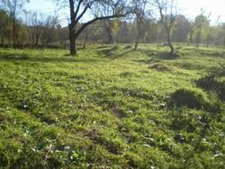 Teren Intravilan de Vanzare in Breaza (Valea Tarsei, Prahova)