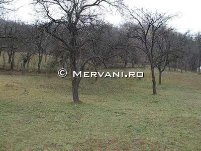 X36F6 – Teren de Vanzare in Sotrile, zona Lunca Mare