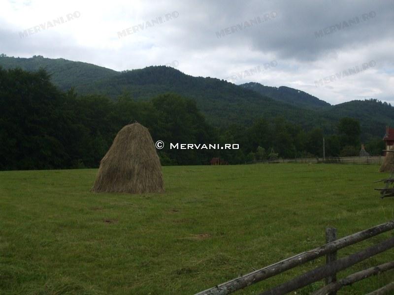 X31481 – Teren de Vanzare in Valea Doftanei, zona Valea Neagra