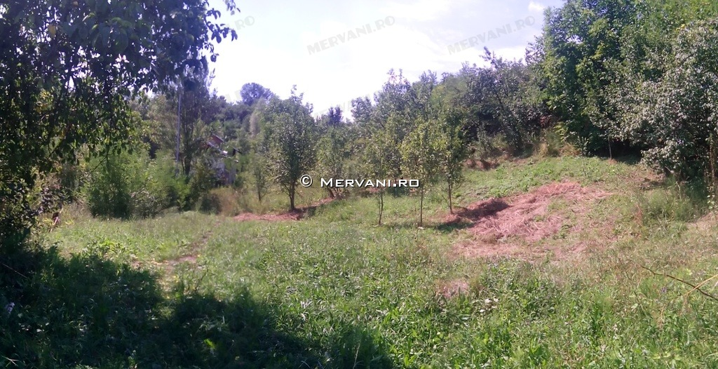 X3176E – Teren de Vanzare in Poiana Campina, zona Ragman