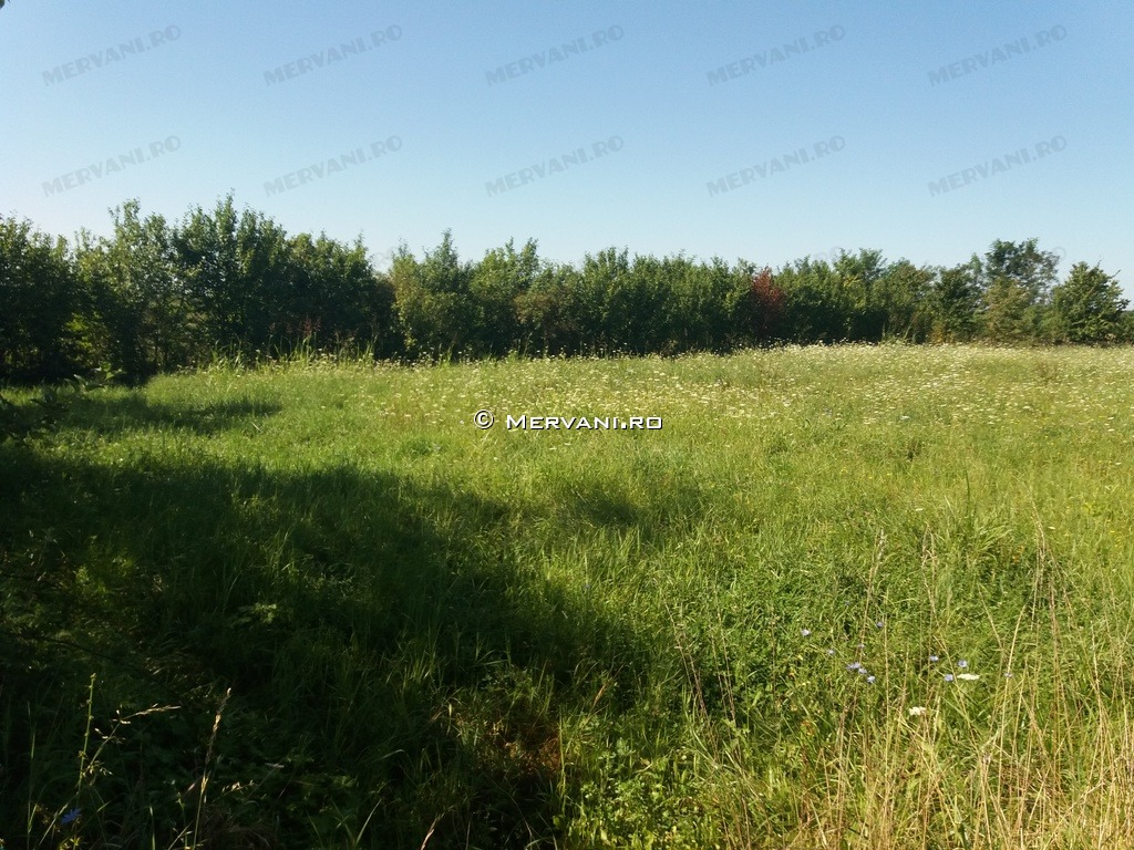 X31ADF – Teren de Vanzare in Scorteni, zona Bordeni