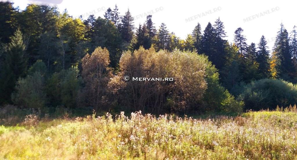 X31B0F – Teren de Vanzare in Predeal, zona Valea Rasnoavei