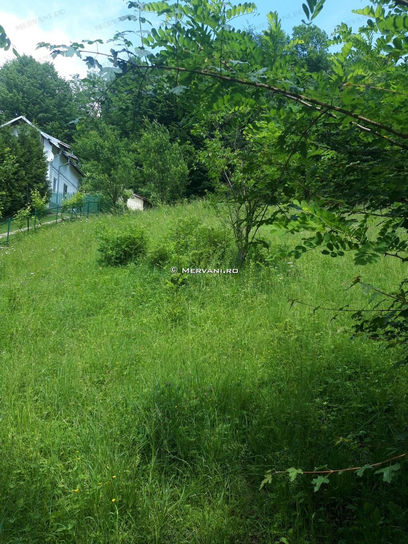 X31BDC – Teren de Vanzare in Provita, zona Provita de Sus