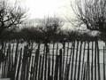 Teren de vanzare in Campina (zona Voila). Imagine pentru oferta X31309 (Fotografia 3).