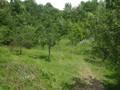 Teren de vanzare in Cornu (zona Cornu de Jos). Imagine pentru oferta X3138F (Fotografia 3).