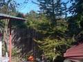 Casa cu 6 camere de vanzare in Sinaia. Imagine pentru oferta X1140C (Fotografia 6).