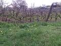 Teren de vanzare in Campina (zona Semicentrala). Imagine pentru oferta 30IP (Fotografia 3).