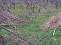 Teren de vanzare in Campina (zona Semicentrala). Imagine pentru oferta 30IP (Fotografia 2).