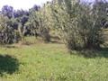 Teren de vanzare in Poiana Campina (zona Semicentrala). Imagine pentru oferta X31545 (Fotografia 2).