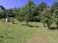 Teren de vanzare in Poiana Campina (zona Semicentrala). Imagine pentru oferta X31545 (Fotografia 4).