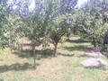 Teren de vanzare in Cornu (zona Cornu de Jos). Imagine pentru oferta X31562 (Fotografia 2).