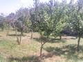 Teren de vanzare in Cornu (zona Cornu de Jos). Imagine pentru oferta X31562 (Fotografia 3).