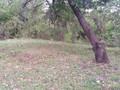 Teren de vanzare in Telega (zona Doftana). Imagine pentru oferta X315F5 (Fotografia 3).