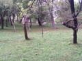 Teren de vanzare in Telega (zona Doftana). Imagine pentru oferta X315F5 (Fotografia 6).