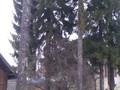 Casa cu 5 camere de vanzare in Predeal (zona Cioplea). Imagine pentru oferta X11627 (Fotografia 3).