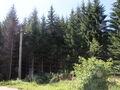 Teren de vanzare in Azuga (zona Partia de Ski). Imagine pentru oferta X31738 (Fotografia 7).