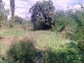 Teren de vanzare in Poiana Campina (zona Ragman). Imagine pentru oferta X3176E (Fotografia 5).