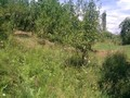 Teren de vanzare in Poiana Campina (zona Ragman). Imagine pentru oferta X3176E (Fotografia 2).