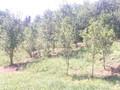 Teren de vanzare in Poiana Campina (zona Ragman). Imagine pentru oferta X3176E (Fotografia 3).