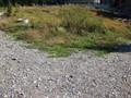 Teren de vanzare in Azuga (zona Partia de Ski). Imagine pentru oferta X31777 (Fotografia 5).
