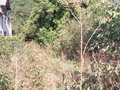 Teren de vanzare in Cornu (zona Cornu de Jos). Imagine pentru oferta X3179B (Fotografia 3).