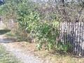 Teren de vanzare in Cornu (zona Cornu de Jos). Imagine pentru oferta X3179B (Fotografia 2).