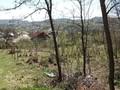 Teren de vanzare in Cornu (zona Cornu de Jos). Imagine pentru oferta X318C7 (Fotografia 3).