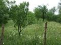 Teren de vanzare in Cornu (zona Cornu de Jos). Imagine pentru oferta X3B19 (Fotografia 5).