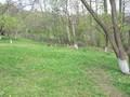 Teren de vanzare in Valea Doftanei (zona Semicentrala). Imagine pentru oferta X3D67 (Fotografia 3).