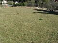 Teren de vanzare in Busteni (zona Piatra Arsa). Imagine pentru oferta X3E80 (Fotografia 5).