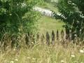 Teren de vanzare in Valea Doftanei (zona Traisteni). Imagine pentru oferta X3C36 (Fotografia 6).