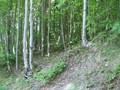 Teren de vanzare in Sinaia (zona Furnica). Imagine pentru oferta X3DB (Fotografia 8).