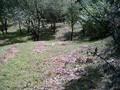 Teren de vanzare in Poiana Campina. Imagine pentru oferta 30I5 (Fotografia 4).