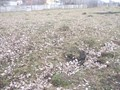 Teren de vanzare in Cornu (zona Cornu de Jos). Imagine pentru oferta X31119 (Fotografia 3).
