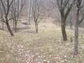 Teren de vanzare in Breaza (zona Gura Beliei). Imagine pentru oferta X3118B (Fotografia 4).