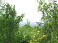 Teren de vanzare in Cornu (zona Cornu de Jos). Imagine pentru oferta X3B19 (Fotografia 12).