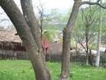 Teren de vanzare in Valea Doftanei (zona Semicentrala). Imagine pentru oferta X3D67 (Fotografia 7).