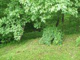 Casa cu 5 camere de vanzare in Breaza (zona Semicentrala). Miniatura #107970 pentru oferta X1531.
