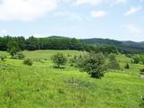 Teren de vanzare in Valea Doftanei (zona Traisteni). Miniatura #109910 pentru oferta X31424.