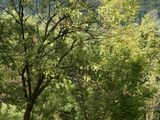 Teren de vanzare in Provita (zona Provita de Sus). Miniatura #76528 pentru oferta X36A2.