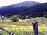 Teren de vanzare in Valea Doftanei (zona Valea Neagra). Miniatura #55946 pentru oferta X3650.
