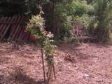 Teren de vanzare in Provita (zona Provita de Jos). Miniatura #114936 pentru oferta X31518.
