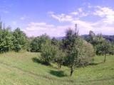 Teren de vanzare in Poiana Campina (zona Semicentrala). Miniatura #115691 pentru oferta X31545.