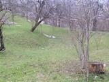 Teren de vanzare in Comarnic (zona Ghiosesti). Miniatura #120382 pentru oferta X31673.