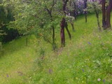 Teren de vanzare in Comarnic (zona Ghiosesti). Miniatura #121536 pentru oferta X316CA.