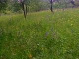 Teren de vanzare in Comarnic (zona Ghiosesti). Miniatura #121537 pentru oferta X316CA.