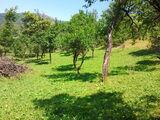 Teren de vanzare in Comarnic (zona DN1). Miniatura #124562 pentru oferta X317CA.